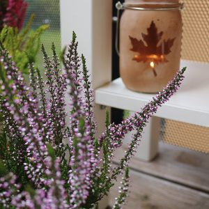 Cozy Fall Days – Unser Herbstbalkon
